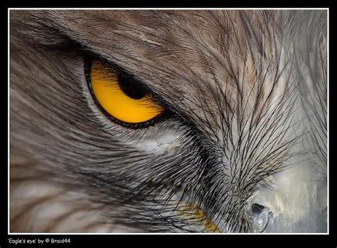 Eagle After Dark